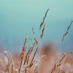 Wyższe odszkodowania dla rolników